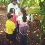My First Corn Maze