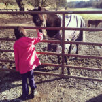 Writer's Workshop: Horse Therapy