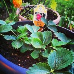 On To Edible Container Gardening  #DigIn