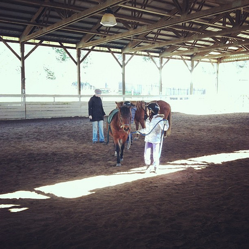 horse lessons3