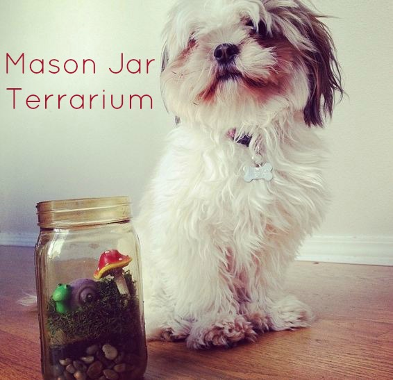 Post image for Episode 39: Mason Jar Terrarium