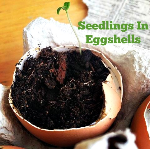 Post image for Episode 44: Seedlings In Eggshells