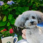 Writer's Workshop: The Perfect Puppy