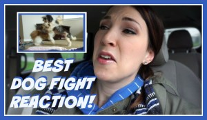 Best Dog Fight Reaction