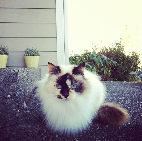 kitty-hailey