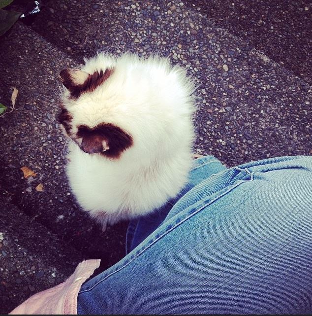 kitty-hailey2
