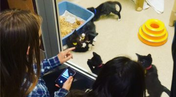 Writer's Workshop: My Cat Sense
