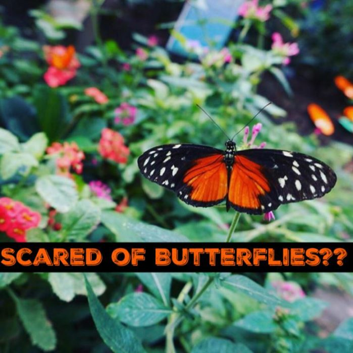 scared-of-butterflies3