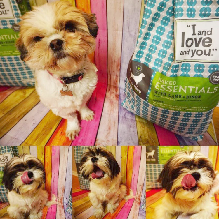 i-and-love-and-you-dog-food
