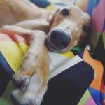 5 Pet Anxiety Tips with Purina
