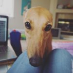 Writer's Workshop: Meet PJ The Greyhound!