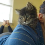 Writer's Workshop: A Foster Kitten Update