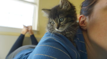 Writer's Workshop: A Foster Kitten Update